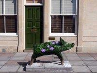 Hedge Hog by Julia Trickey