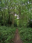 Littleheath Wood