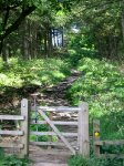 Coast to Coast - Day 12 - the flagstone path up through the wood led to the moors