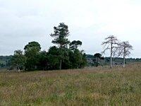 Eeyore's Gloomy Place