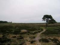Coast to Coast - Day 15 - the last bit of moorland to cross on the North York Moors