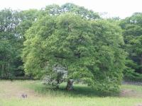 Coast to Coast - Day 2 - sheltering tree