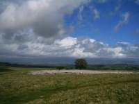 Coast to Coast - Day 6 - trees in limestone pavement