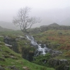 Coast to Coast - Day 3 - a tree in the mist looms over a small waterfall