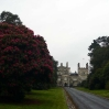 Tregothnan: The House at the Head of the Valley - and really long drive