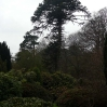 The weather was not good, but the canopy of the Monkey Puzzle looked like good shelter