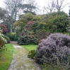 Rhododendrons, Camellias and Azaleas abounded at Tregothnan