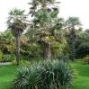 Palm Garden at Ventor Botanic Garden, IoW