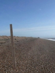 A view along the beach towards Dungeness