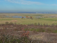 Cliffe Marshes and RSPB Reserve - no place for an airport!