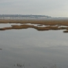 The marshland at Pegwell Bay