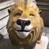 Lions of Bath 2010