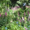 Ness Botanic Garden, June 2004