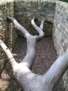 Yorkshire Sculpture Park, June 2007. Hanging Trees by Andy Goldsworthy