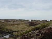 Heather regeneration work ongoing on Bleaklow