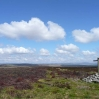 The moorland north of Bellingham