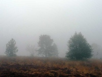 Foggy and wet Ashdown Forest