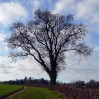 A lone tree in winter