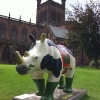 Rhinos in Chester