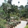 Cacti garden at Huntington Botanic Gardens