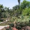 Cacti at Huntington Botanic Gardens