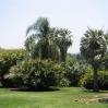 Palm grove at Huntington Botanic Gardens