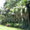 Huntington Botanic Gardens