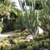 Cacti garden at Lotusland