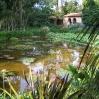 Waterlily pool at Lotusland