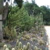 Cacti at Lotusland