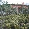 Cacti at Lotusland