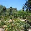 Aloes at Taft Ranch