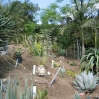 Garden of John Rees, with a fantastic collection of palms, aloes and cycads