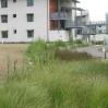 New landscaping with sustainable drainage around UCSB accommodation blocks