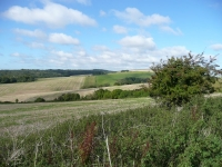 The rolling downland of the western end of the South Downs
