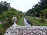An avenue of Cordylines at Castle Kennedy