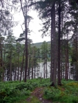 Walking in the woodland along the southern side of Loch Trool