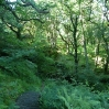 Heading down through woodland to New Luce