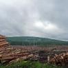 Some forestry workings near Benbrack