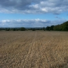 A field of stubble looking towards the South Downs
