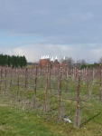 Orchard and oast houses in Kent on the Wealdway