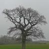 A lone tree along the Wealdway