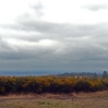 The view northwest in the rain from Camp Hill on Ashdown Forest