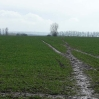 The Wealdway heading north across yet another slippery field of winter wheat