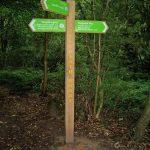 Littleheath Wood, the London Loop is perhaps a future walk