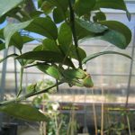 Jerusalem Botanic Garden - now that is bio control !!