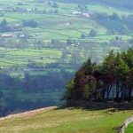 A circle of trees at Kirkcarrion header image (from day 11)